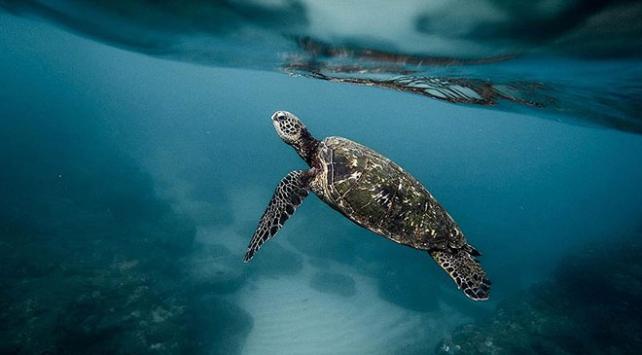 Meksikada yeni bir kaplumbağa türü keşfedildi