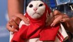 Kahin ahtapot Paulün görevi kediye devredildi