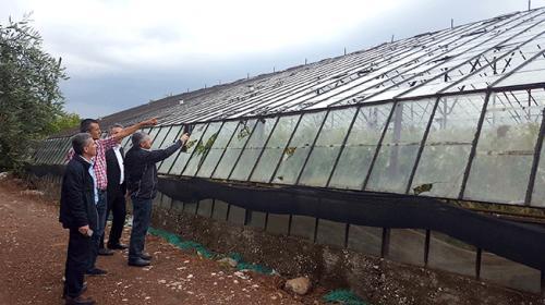 Antalyada şiddetli yağış seralara zarar verdi
