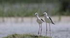 Van Gölü havzasında kuş popülasyonu canlandı