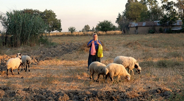 Adana Ceyhan'da Tarıma Dayalı İhtisas Besi Süt Organize Sanayi Bölgesi kurulacak
