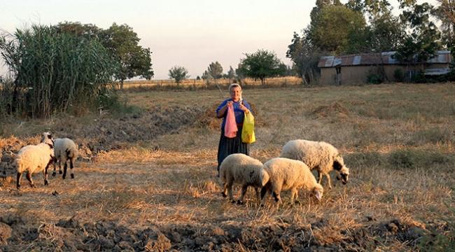 Adana Ceyhanda Tarıma Dayalı İhtisas Besi Süt Organize Sanayi Bölgesi kurulacak
