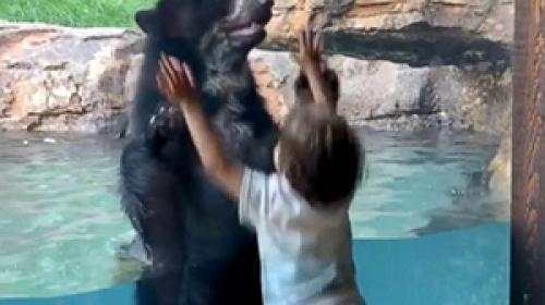 Hayvanat bahçesindeki ayının zıplama yarışı