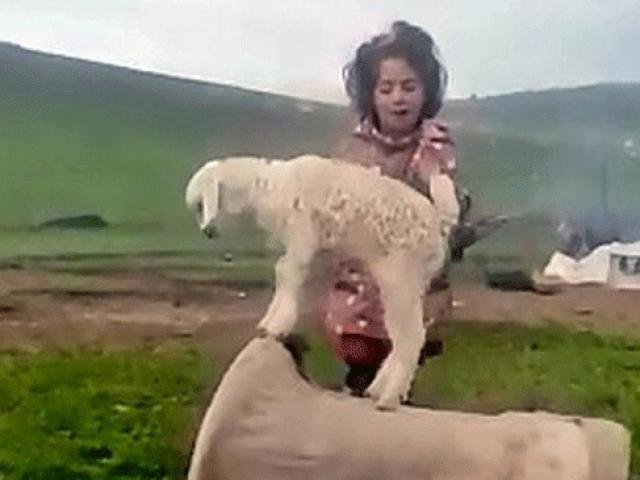 Küçük kız şarkı söyledi, keçi yavrusu dans etti