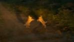 İki tavşanın kavgası kameraya yansıdı