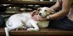 Hayvanlara şiddet uygulayanlara çok ağır cezalar geliyor