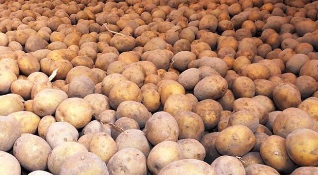 Patatesin fiyatının artmasına hastalık sebep oldu