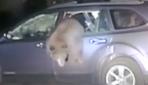 Arabada kilitli kalan ayı kurtarıldı