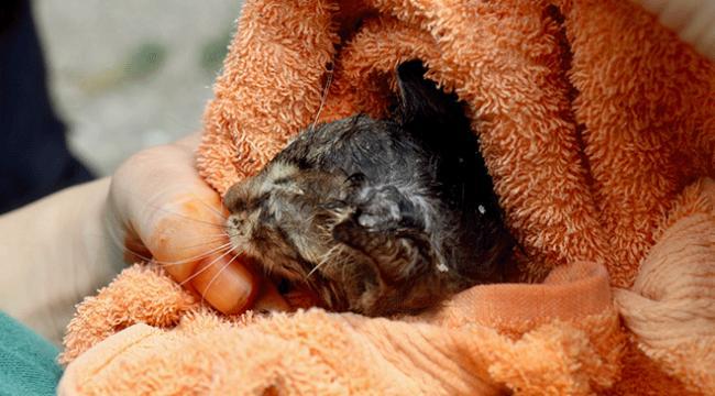 Düzcede boruya sıkışan yavru kediyi itfaiye kurtardı