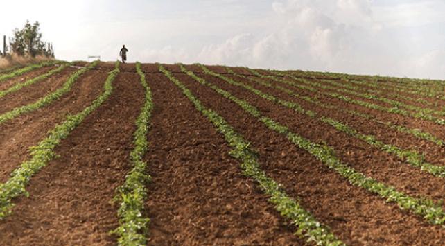 Hazine'ye ait tarım arazilerinin kiralanmasıyla ilgili yeni düzenleme