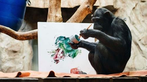 Sanatçı ruhlu Şempanze Lucynin resimleri açık artırmayla satışa sunulacak