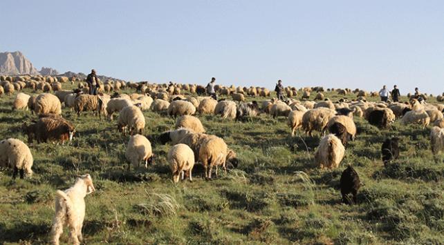 Terörden arındırılan köylerine geri döndüler