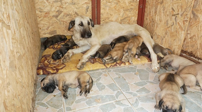 Leydi 15 yavruya annelik yapıyor