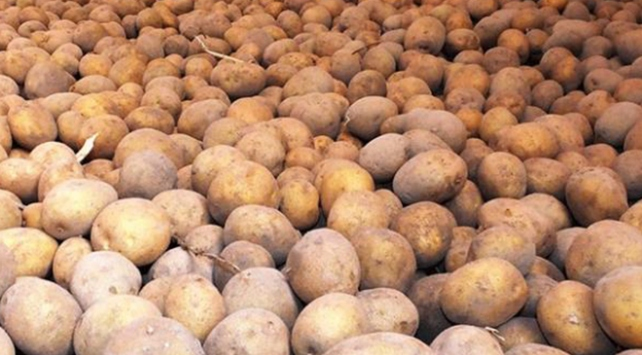 Hükümet patates fiyatlarını düşürmek için harekete geçti