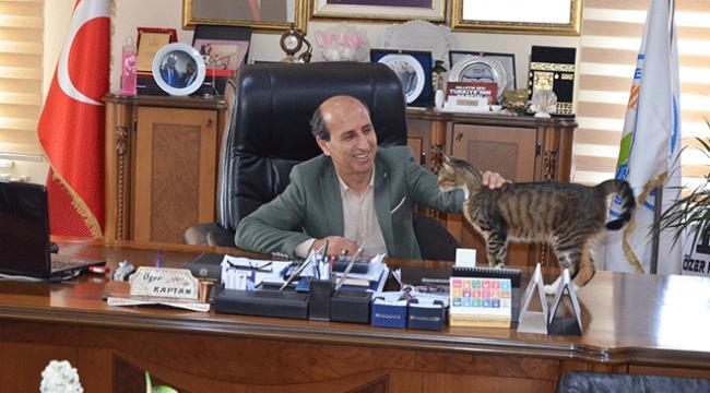 Esenköy Belediyesi kapılarını kedilere açtı