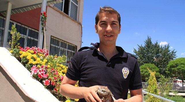 Polis memuru yaralı baykuşun sağlığına kavuşmasını sağladı