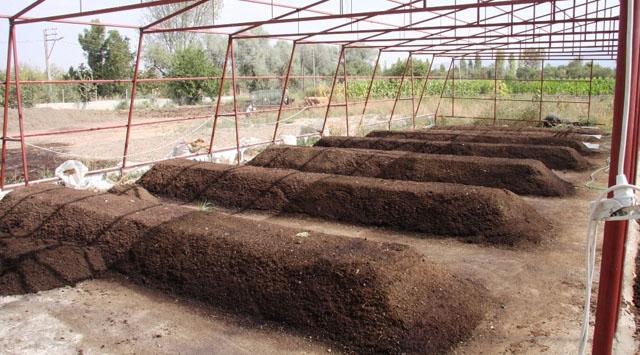 Tarımda yeni eğilim: Solucan gübresi