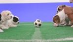 İngiliz taraftarlar için alternatif fikstür: Köpek yavrusu futbolu