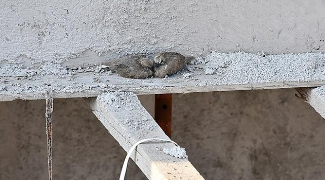 Kuş yuvasını bozmamak için inşaatı durdurdu