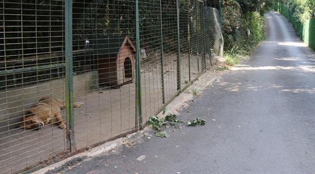 Adnan Oktarın bahçesindeki hayvanlar barınağa gönderildi