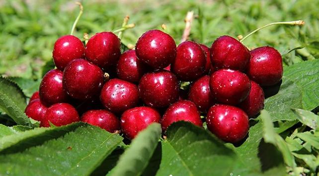 Rusya'ya meyve ihracatı arttı