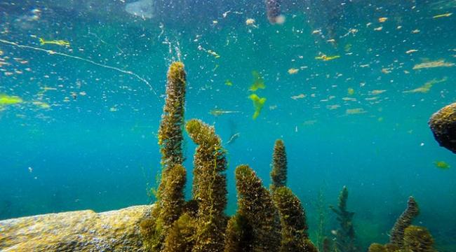 Zengin florasıyla Ağrının su altı güzellikleri