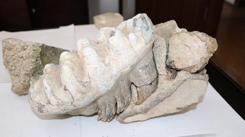 Yozgatta 8 milyon yıllık çene kemiği fosili bulundu