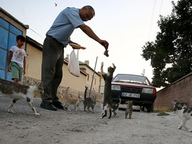 Kediler muhtarın yolunu gözlüyor