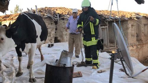 Çatıda mahsur kalan ineği itfaiye ekipleri kurtardı