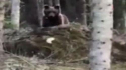 """Ormanda gördüğü ayıyı """"Gel oğlum"""" diyerek çağırdı"""