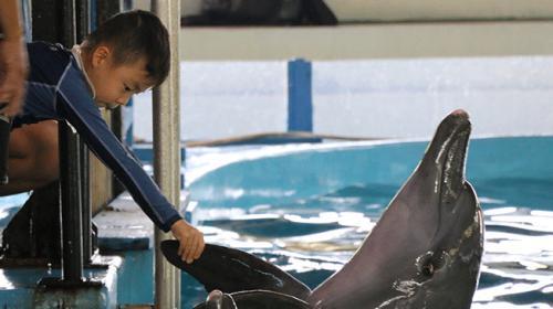 Endonezyada otistik çocuklara yunuslarla terapi yapılıyor