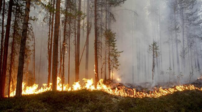 İsveçte orman yangınları kontrol altına alınamıyor
