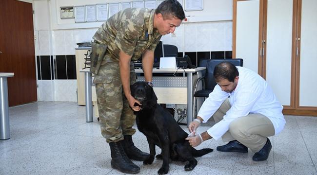 Sınırda görevli mayın arama köpeklerine bakım