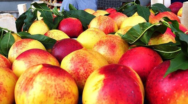 Rusyaya yaş meyve sebze ihracatı yüz güldürüyor