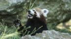 Darıcadaki hayvanat bahçesi 3 bin 600 hayvana ev sahipliği yapıyor