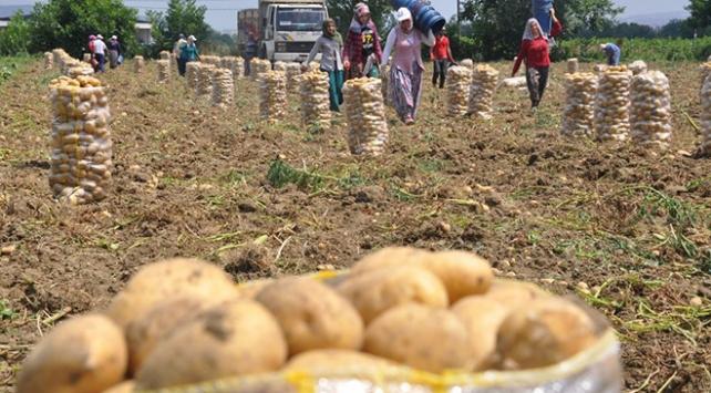 Domates ve patates fiyatları sabit tutulacak