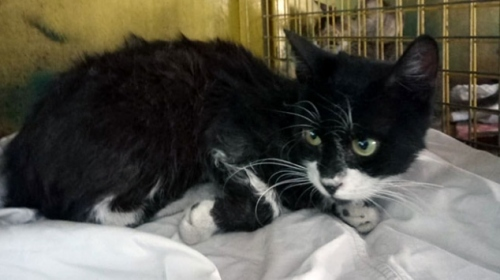Zehirlenen kediyi itfaiye ekipleri hayata döndürdü