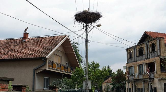Sırbistanda leylek dostu kasaba