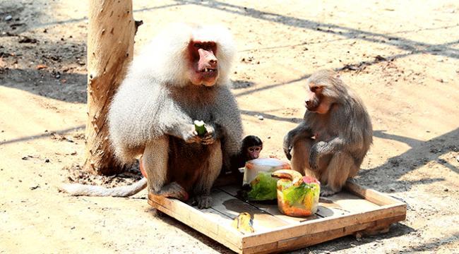 Kavurucu sıcaklarda hayvanlar buzlu meyvelerle serinletiliyor