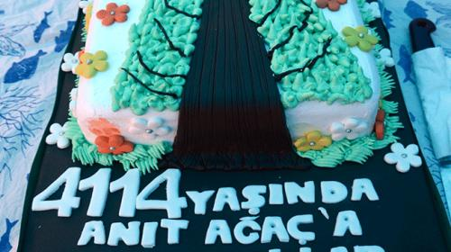 En yaşlı porsuk ağacına doğum günü pastası kesildi