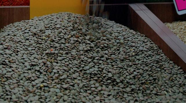 Toprak Mahsulleri Ofisi yeşil mercimek alımına başlayacak