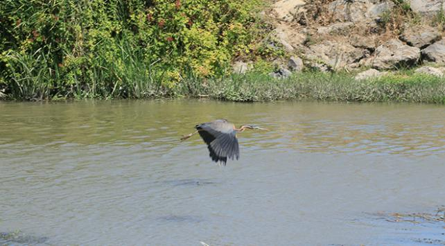 Kuş Cenneti doğal yaşam alanıyla ilgi çekiyor