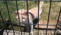Kedi Olalı Bir Fare Tuttular
