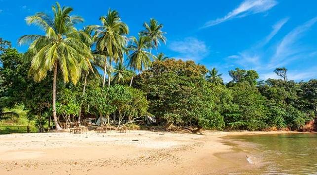 Pasifikte Hindistan cevizi ağaçları tehlikede