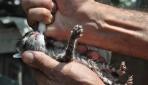 Sandıkta bulduğu kedi yavrularını şırıngayla besliyor