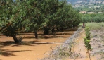 Antalya Elmalıda ikinci sel felaketi