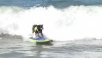 Californianın sevimli sörfçü köpekleri