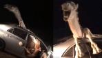 Araba çarpan devenin korku dolu anları
