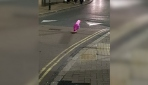 Pembe martı Pinky İngiltere sokaklarında geziyor