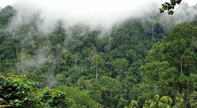 Amazonlarda kuraklık karbon emilimini tersine çeviriyor